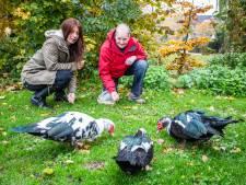 Buurt ziet verzorgers als bron van 'eend-ellende' in Oud-Beijerland