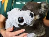 Tv-actie SOS Koala voor hulp aan bedreigde dieren Australië