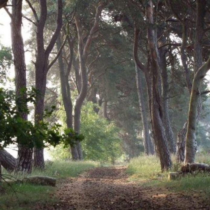De Herbertusbossen in Heeze worden genoemd als een van de zoekgebieden voor het grootschalig opwekken van duurzame energie.