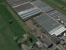 90 huizen op plek van kwekerij Van Koolwijk in Velddriel? Nu even niet