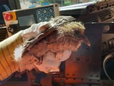 Jonge duiven gedumpt bij grofvuil Katendrecht: 'Dit heb ik nog nooit meegemaakt'