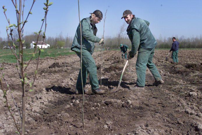 Zaterdag 30 november planten Natuurpunt en de Aarschotse scouts alvast 3.300 bomen aan.