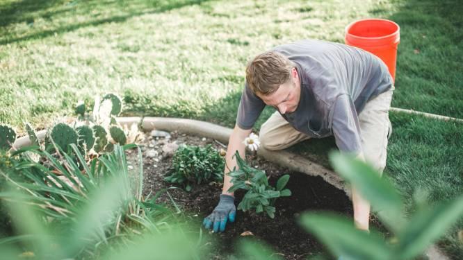 Werken in de tuinbouw: hoeveel verdien je en welke functieprofielen hebben ze nodig?