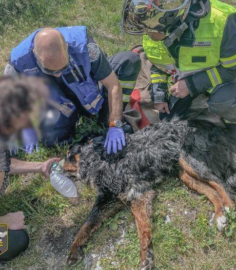 Brandweer redt leven van hond die achterbleef in brandend huis