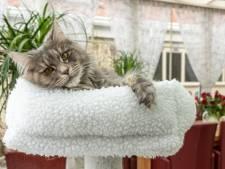 Kattenliefhebbers kunnen nu een dna-test afnemen voor hun huistijger