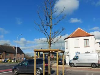 Stad start testproject waterzakken tegen uitdroging bomen