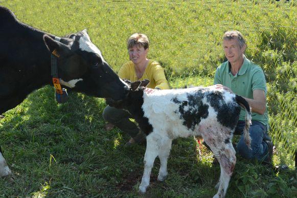Herman Cerpentier en Els De Cock kozen enkele jaren terug om enkel nog biologische melk te produceren.