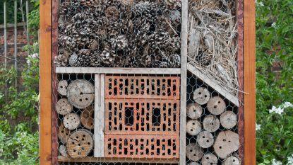 Kinderen bouwen zelf bijenhotel