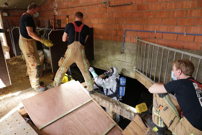 Daarna werd met houten planken een schans gemaakt langs waar de dieren omhoog konden gedreven worden.