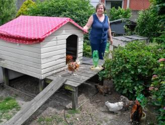 Online workshop kippen houden