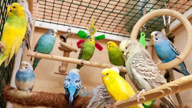Opnieuw 245 verwaarloosde dieren in beslag genomen in Bocholt