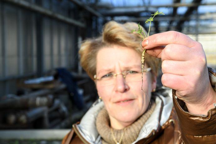 Janneke Klootwijk toont een mini-wortel