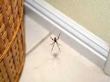L'heure (précise) à laquelle les araignées envahissent nos maisons