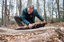 """Jeroen van Delft zoekt naar de hazelworm onder een dode boomstam. ,,Ik zie precies het voedsel van de hazelworm. Het is er vochtig, dat vindt-ie prettig."""""""