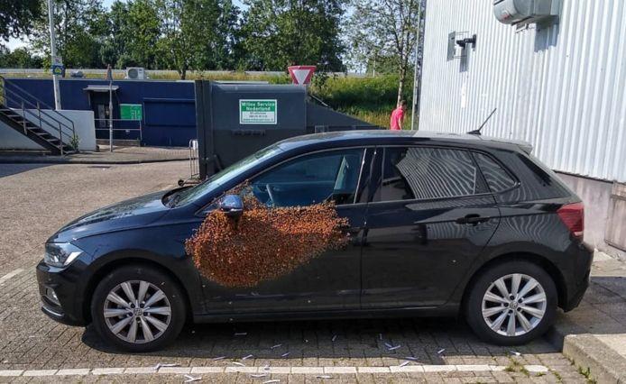 Bijen nemen een auto over in Rotterdam Prins-Alexander