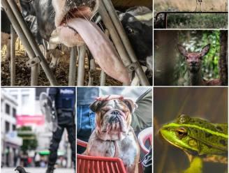 Bij de beesten af... Ontdek het geestig beestige jaaroverzicht van onze fotograaf