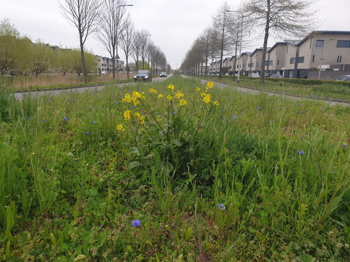 De middenberm van de Middeldijkdreef wordt ecologisch beheerd.