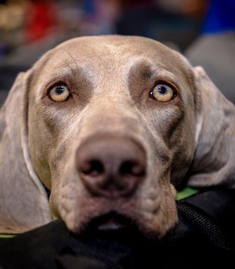Afschaffing van de hondenbelasting? Die beslissing wordt door het coronavirus nog even uitgesteld