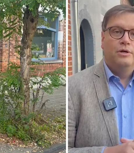 Une dame de 80 ans a fait pousser du cannabis sur son trottoir à Anderlecht... en donnant à manger aux oiseaux
