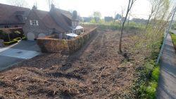 Na jaren procederen: Kortrijk kapt 142 bomen aan Pottelberg, omwonenden hebben zonlicht terug