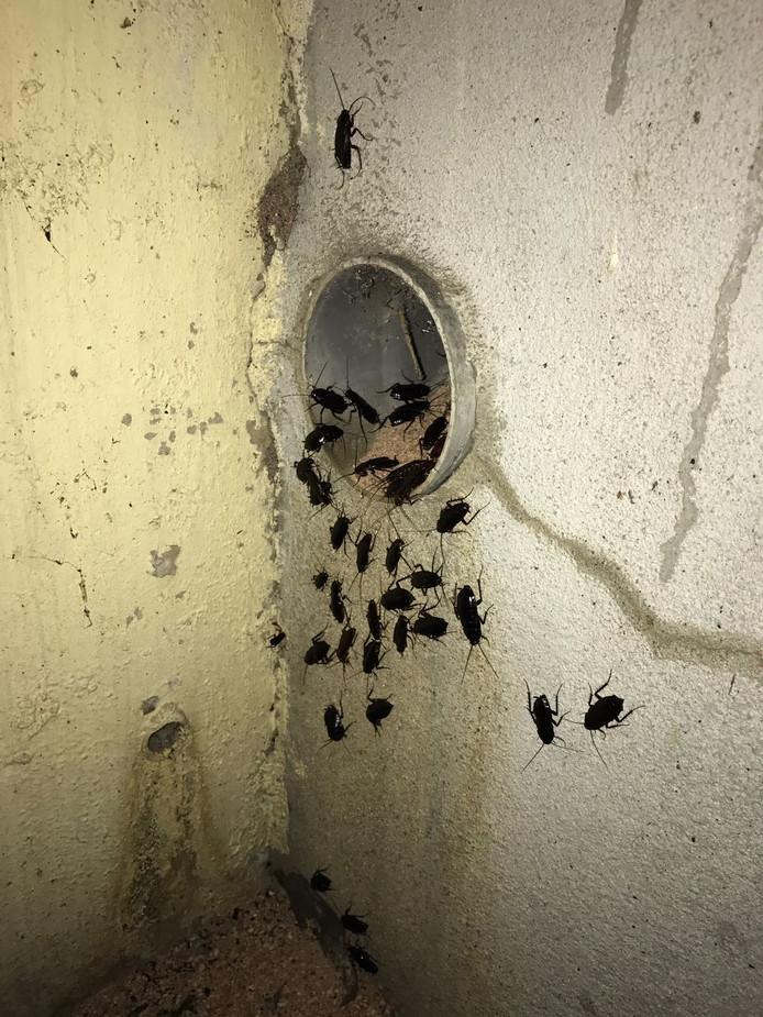 Kakkerlakken in een politiebureau.