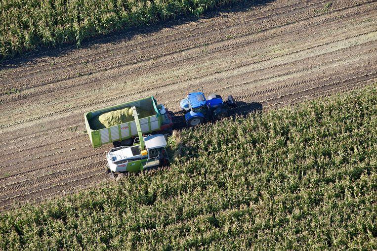 Op veel akkers staat jaar in jaar uit mais. Die eenzijdige teelt put de bodem uit.  Beeld ANP
