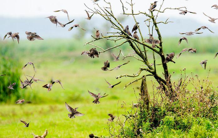 Vogels in de Oostvaardersplassen.