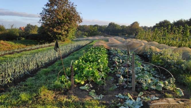 """Stad moet op zoek naar nieuwe concessionaris voor Stadsboerderij: """"Het vertrouwen was zoek"""""""