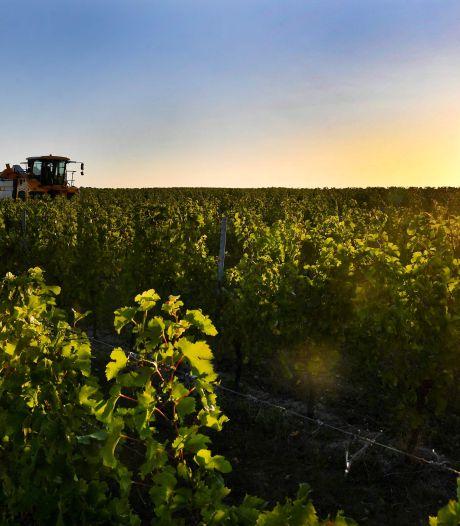 Le vignoble bordelais s'attend à une récolte réduite... mais de très bonne qualité!