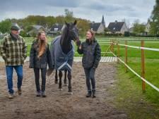 Hoe paardentherapie een plek veroverde in het hart van Stichting Hulphond: 'Ze kijken dwars door je heen'