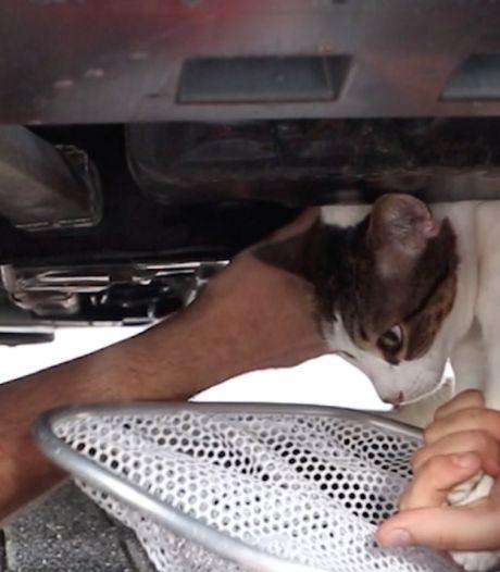 Wegenwacht en brandweer kunnen kat Delfi niet uit motorblok auto bevrijden, garage moet het doen