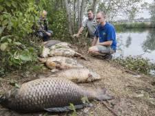 Waterschap blijft pompen in Oldenzaalse visvijver
