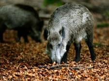 Jagersvereniging: jachtverbod op de Veluwe vanwege droogte niet reëel