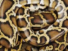 Un python découvert dans la cuvette d'une toilette à Piéton