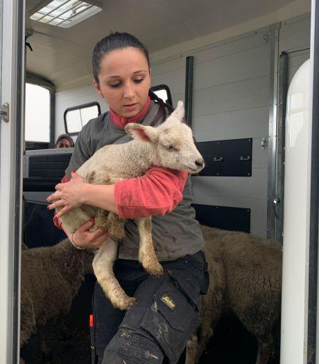 Septante animaux sauvés de conditions de vie épouvantables à Lessines