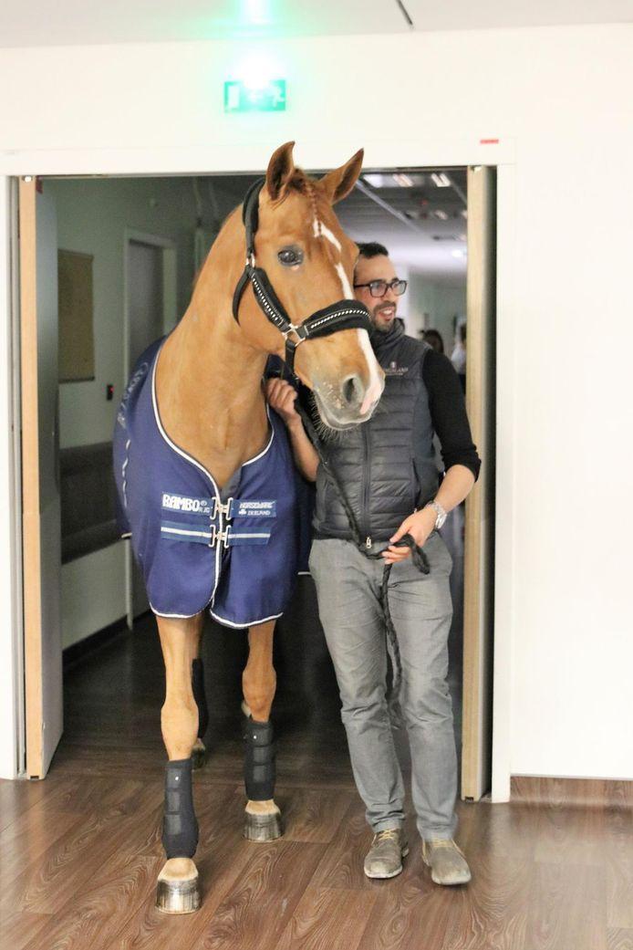 Peyo en zijn trainer.