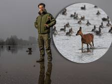 Hoogwater drijft dieren langs IJssel in het nauw: zeker wanneer wij te dichtbij komen