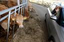 Vlak bij de dieren komen in de auto, het kan in Malden.