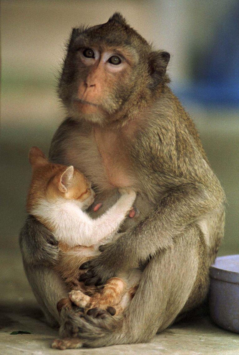 Een aap met een katje in haar schoot.  Beeld Reuters