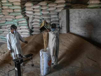 """Pakistan woest over Indiase claim basmatirijst: """"Alsof je een atoombom op ons hoofd gooit"""""""