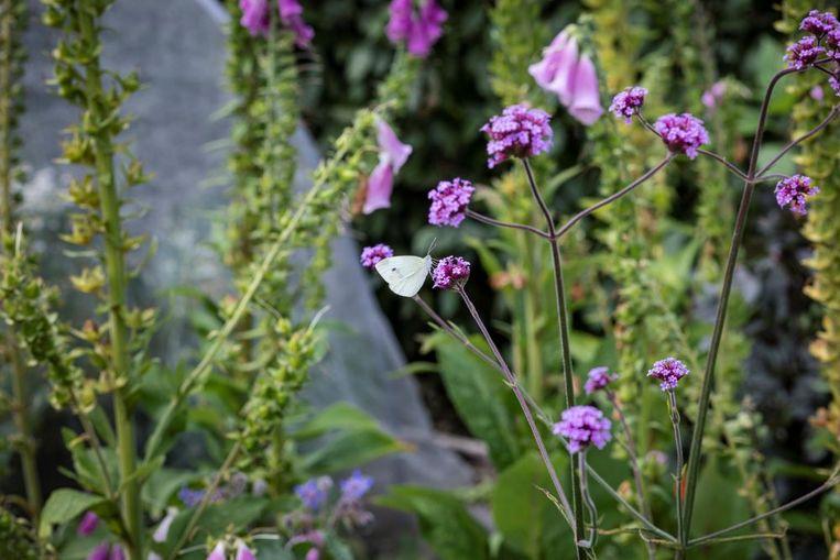 Tussen de planten zitten tal van rupsen en poppen van vlinders verstopt