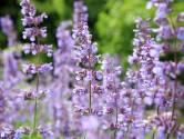 'Wil het tuincentrum meer insecten of bladluizen in de tuin?'