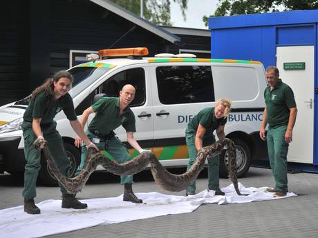 Gigantische wurgslang van bijna 5 meter gevonden langs spoor in Oosterbeek