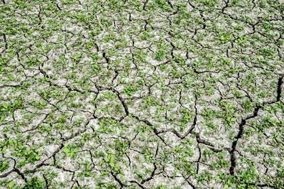 Droogteproblemen dreigen al vroeg: 'Er moet veel regen vallen'