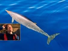 Fleur Visser doet onderzoek naar onbekende dolfijnsoorten: 'Schuwe dieren'