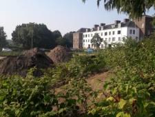 Mogelijke oplossing in strijd tegen Japanse plant die Nederland al jaren teistert