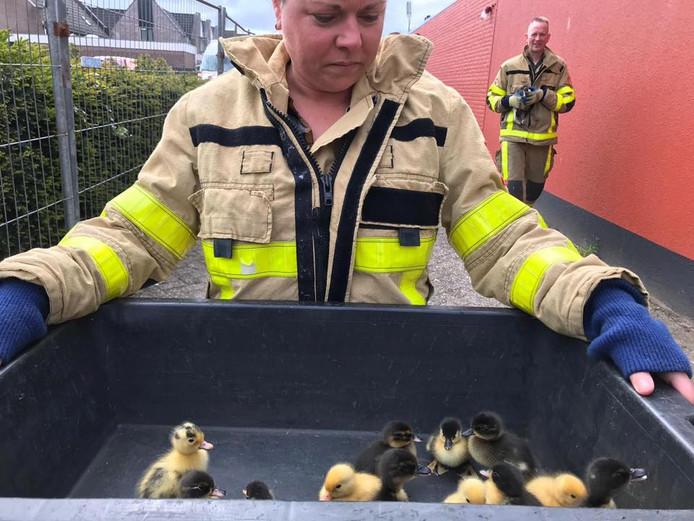 De brandweer redde ongeveer 15 eendjes uit een slooppand in Twello.