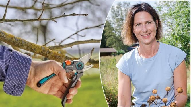 """Onze tuinexpert test 7 snoeischaren: """"Met een goede schaar snoei je langer en met minder moeite"""""""