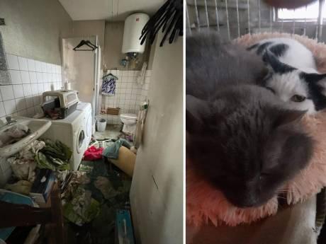 """Sept chats sauvés d'un appartement insalubre à Verviers: """"Je n'en veux pas à la propriétaire"""""""