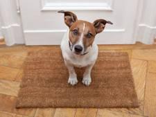 In West Maas en Waal ga je veel minder voor je hond betalen